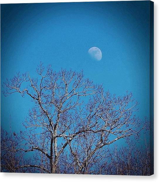 Moon Over Tree Canvas Print