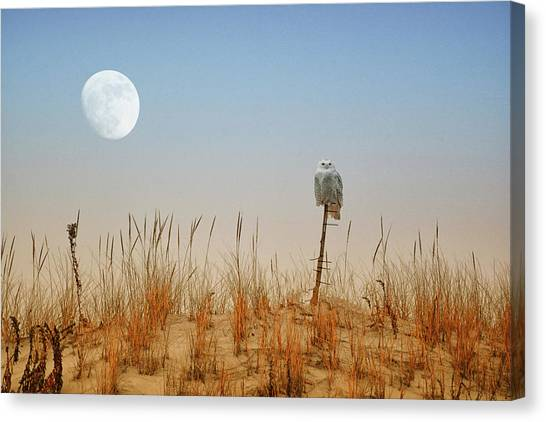 Moon Rise Snowy Owl Canvas Print