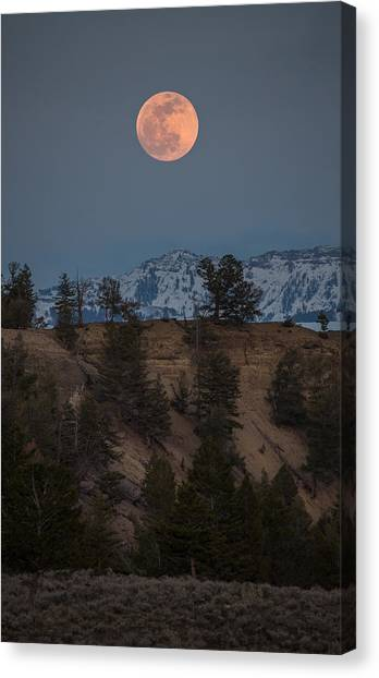 Moon Rising // Tower Junction, Yellowstone National Park Canvas Print