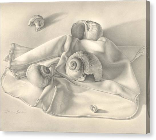 Moon Snail Still Life Canvas Print