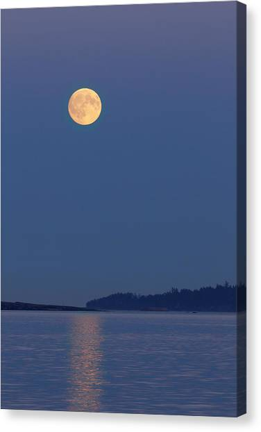 Moonlight - 365-224 Canvas Print