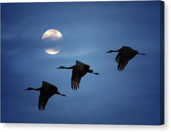 Moonlit Flight Canvas Print