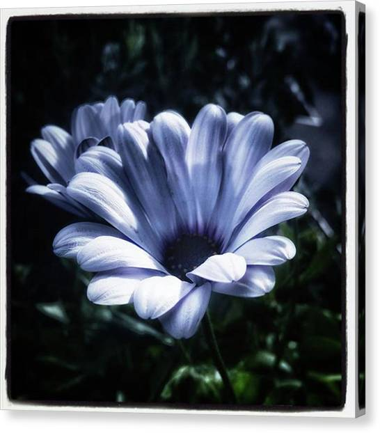 Canvas Print featuring the photograph Moonlit Petals. From The Beautiful by Mr Photojimsf