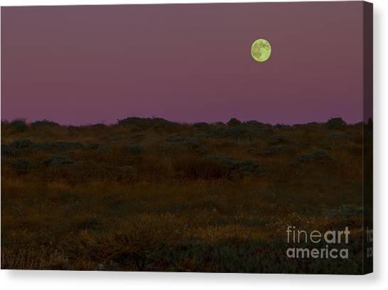 Bodega Canvas Print - Moonrise In Bodega Bay by Diane Diederich