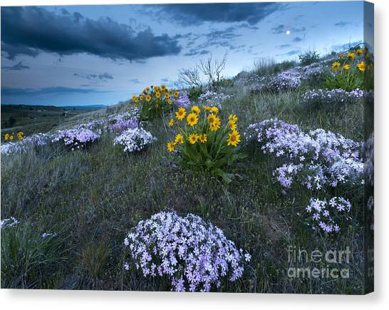 Phlox Canvas Print - Moonrise Over Snow Mountain Ranch by Mike Dawson