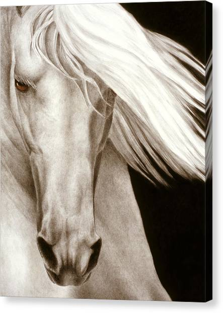 White Horse Canvas Print - Moonrise by Pat Erickson