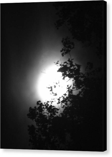 Moonshine Through The Leaves Canvas Print