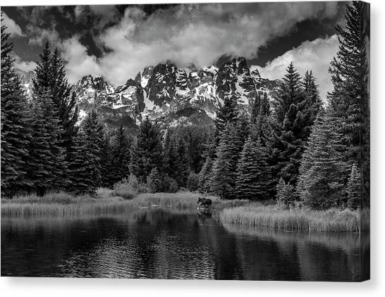 Canvas Print featuring the photograph Moose At Schwabacher's Landing by Gary Lengyel