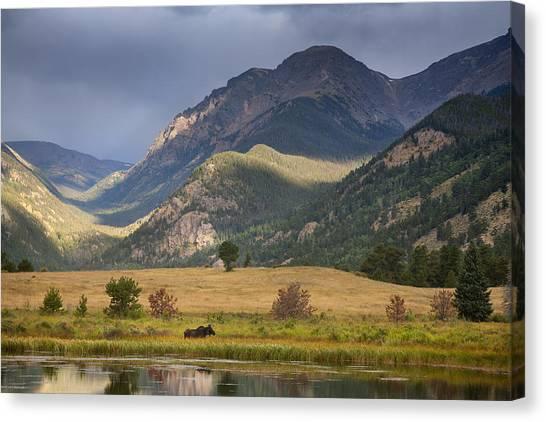 Moose At Sheep's Lakes Canvas Print