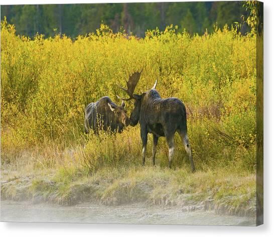 Moose Couple Canvas Print