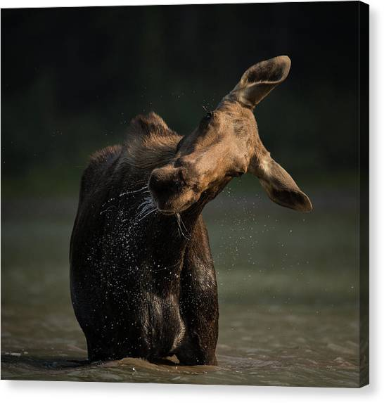 Moose Drool // Glacier National Park  Canvas Print