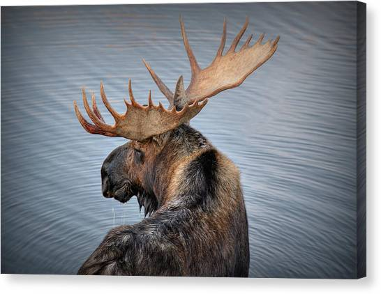 Teton Canvas Print - Moose Drool by Ryan Smith