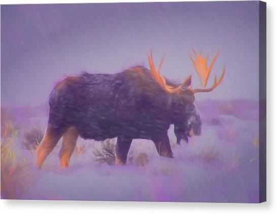 Moose In A Blizzard Canvas Print
