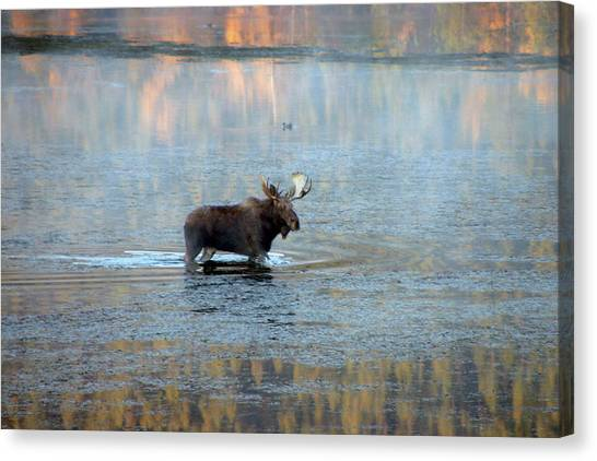 Moose In Autumn Snake Canvas Print by Michael Riley