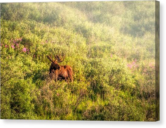 Moose In The Mist Canvas Print