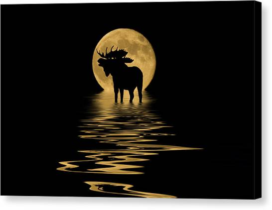 Moose In The Moonlight Canvas Print