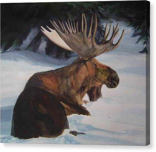 Moose In Winter Canvas Print by Susan Tilley