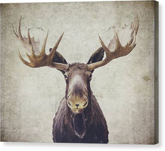 Animal Canvas Print - Moose by Nastasia Cook