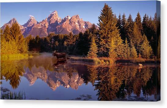 Moose Tetons Canvas Print