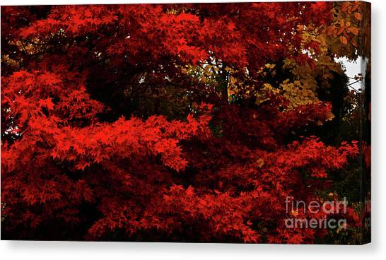 More About Maple Canvas Print
