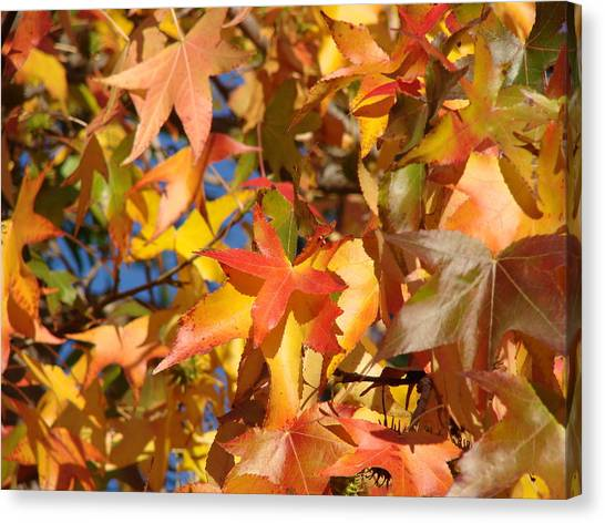 More Autum Leaves Canvas Print by Liz Vernand