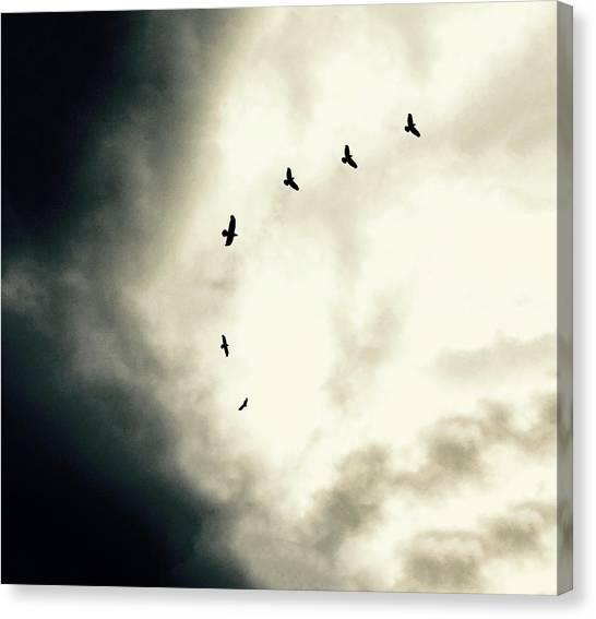 Big Sky Crows Canvas Print
