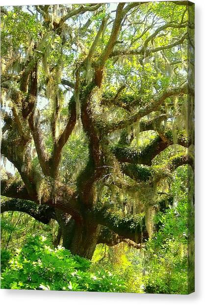 More Spanish Moss Please Canvas Print by Beth Akerman