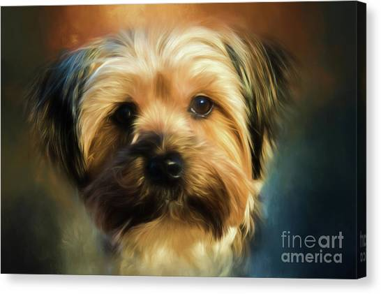 Morkie Portrait Canvas Print
