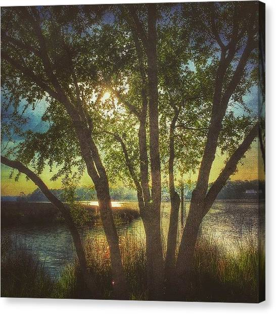 Bayous Canvas Print - Morning Along The Bayou #tree #bayou by Joan McCool