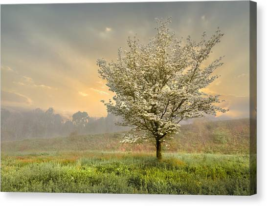 Mountain Dew Canvas Print - Morning Celebration by Debra and Dave Vanderlaan