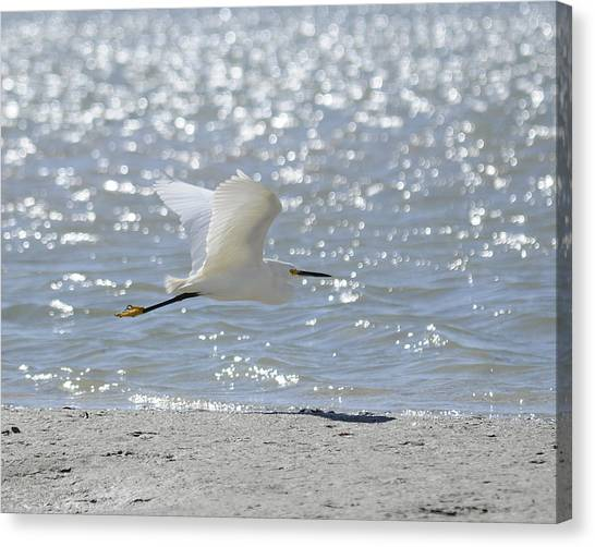 Morning Flight Canvas Print by Keith Lovejoy