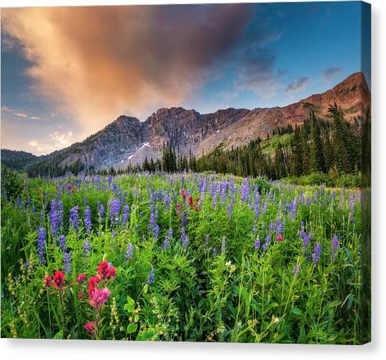 Morning Flowers In Little Cottonwood Canyon, Utah Canvas Print