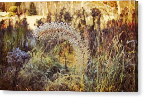 Morning Frost Canvas Print by JAMART Photography