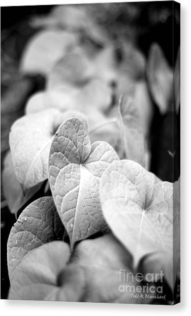 Morning Glory Vines Canvas Print