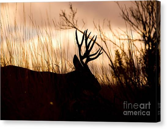 Morning Glow Canvas Print