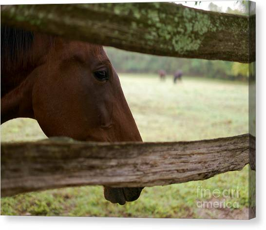 Morning Greeting Canvas Print