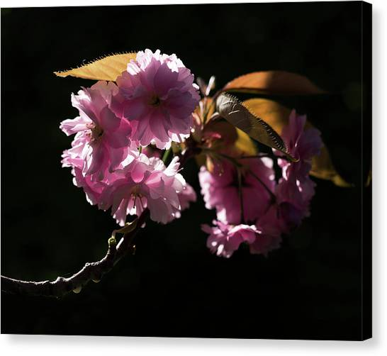 Canvas Print featuring the photograph Morning Light by Helga Novelli