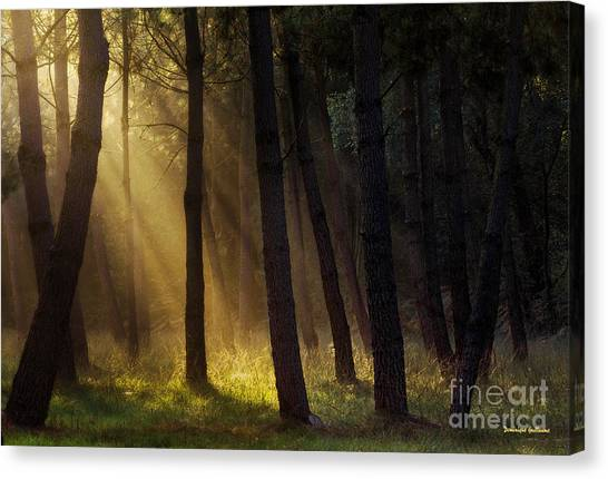 Morning Light In The Forest Canvas Print