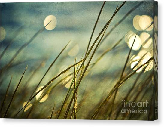Bayous Canvas Print - Morning Light by Joan McCool