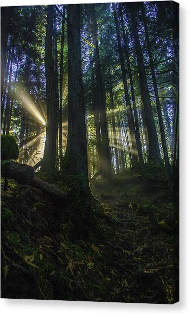 Morning Light Rays Canvas Print