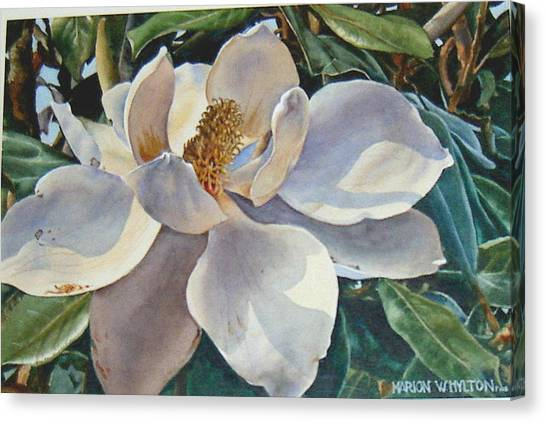 Morning Magnolia Canvas Print by Marion  Hylton