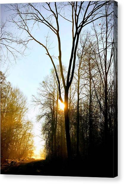 Forests Canvas Print - Morning Mood In The Forest by Matthias Hauser