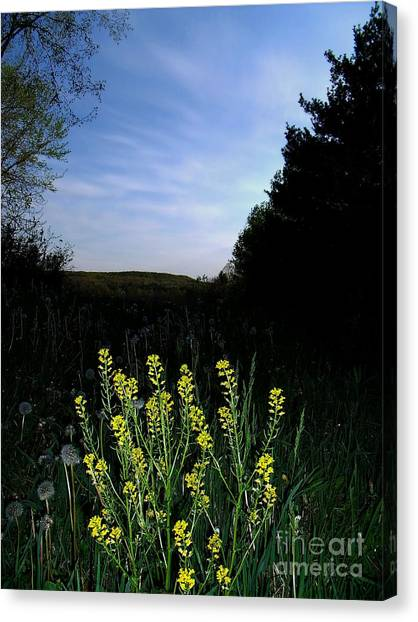 Morning Musturd Canvas Print by The Stone Age