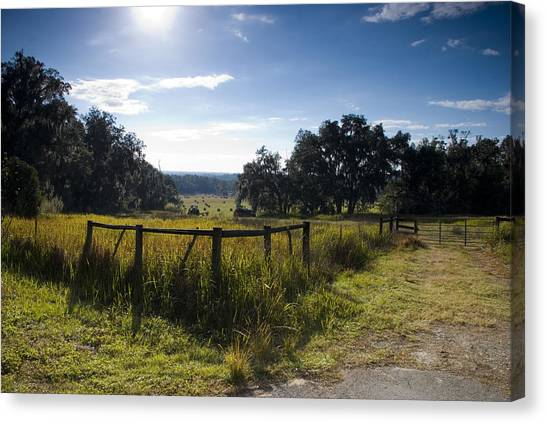 Canvas Print featuring the photograph Morning On The Farm by Beverly Stapleton