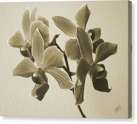 Morning Orchid Canvas Print