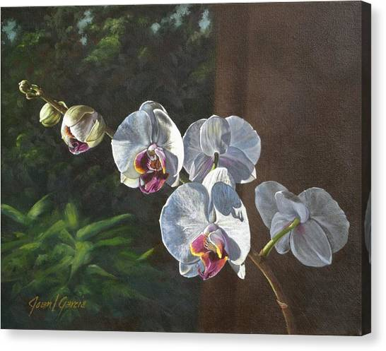 Morning Phaleanopsis Canvas Print