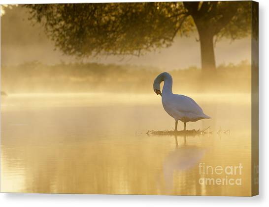 Morning Preen Canvas Print