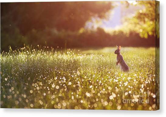 Morning Rabbit Canvas Print