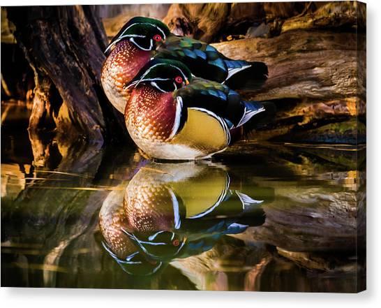Morning Reflections - Wood Ducks Canvas Print
