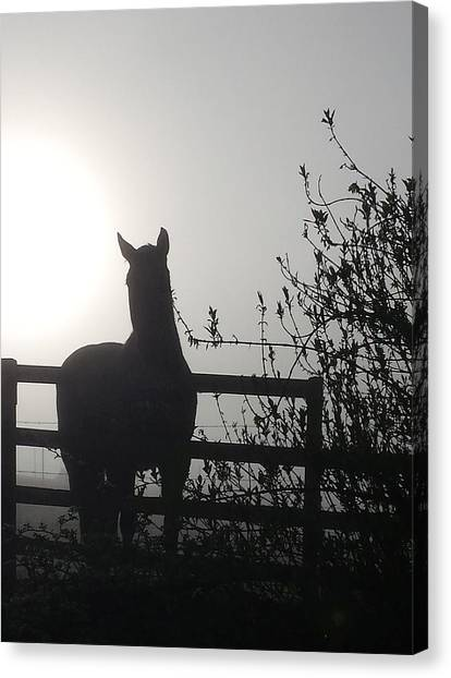 Morning Silhouette #1 Canvas Print